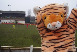 Hello Tommy Tiger, are you enjoying your day out from the Safari Park?